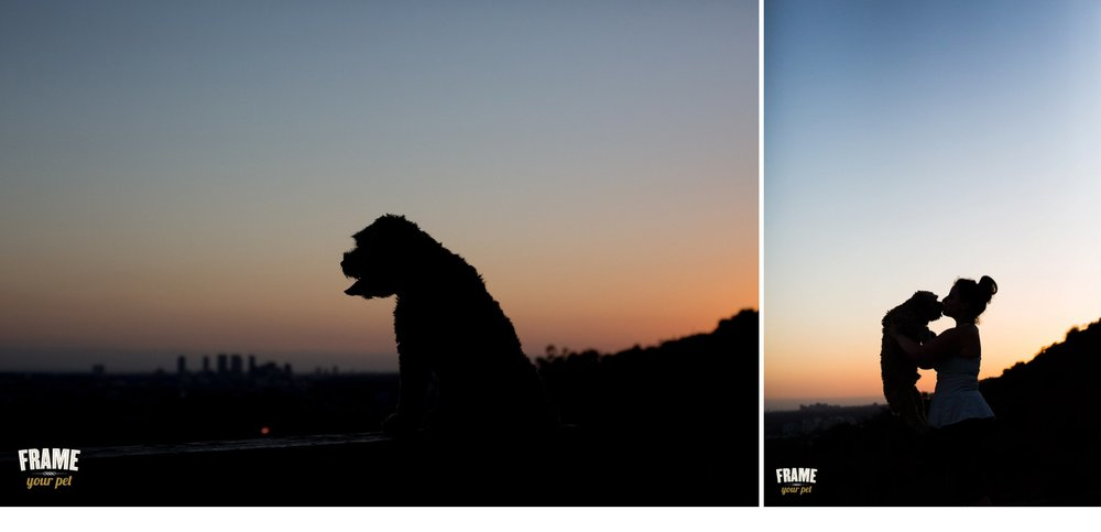 Beautiful dog photo session with the sunset on top of Runyon Canyon.