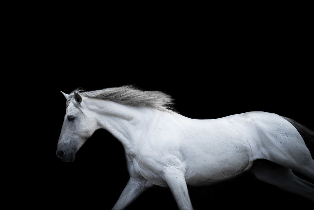 los-angeles-modern-equine-photography-white-horse-running.jpg