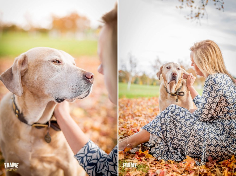 dog photographer walnut creek bay area