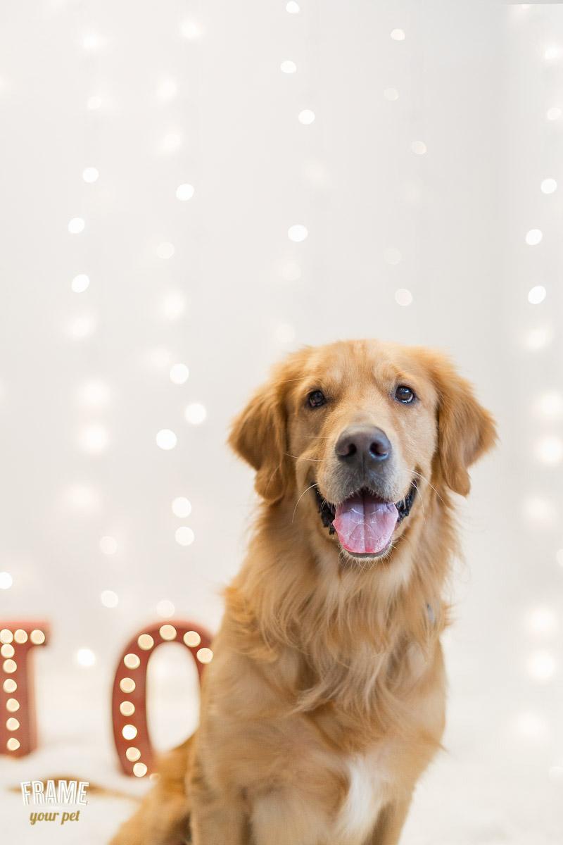 los-angeles-modern-dog-photography-9.jpg