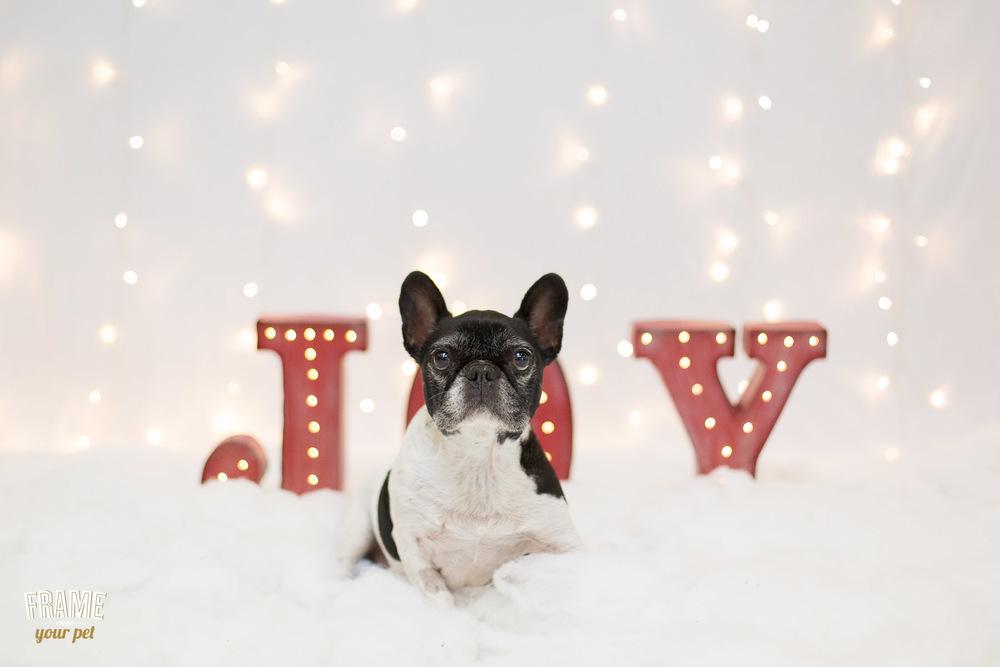los-angeles-modern-dog-photography-17.jpg
