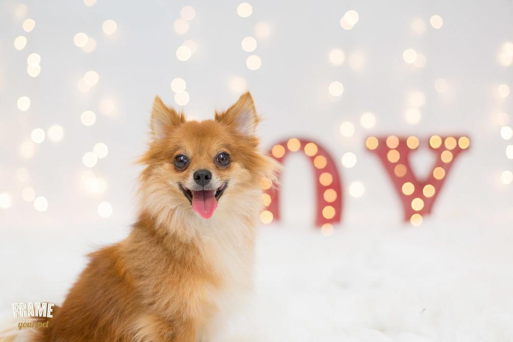 los-angeles-modern-dog-photography-19.jpg