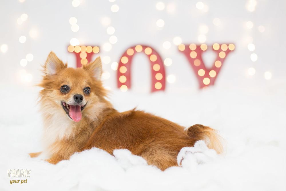 los-angeles-modern-dog-photography-20.jpg