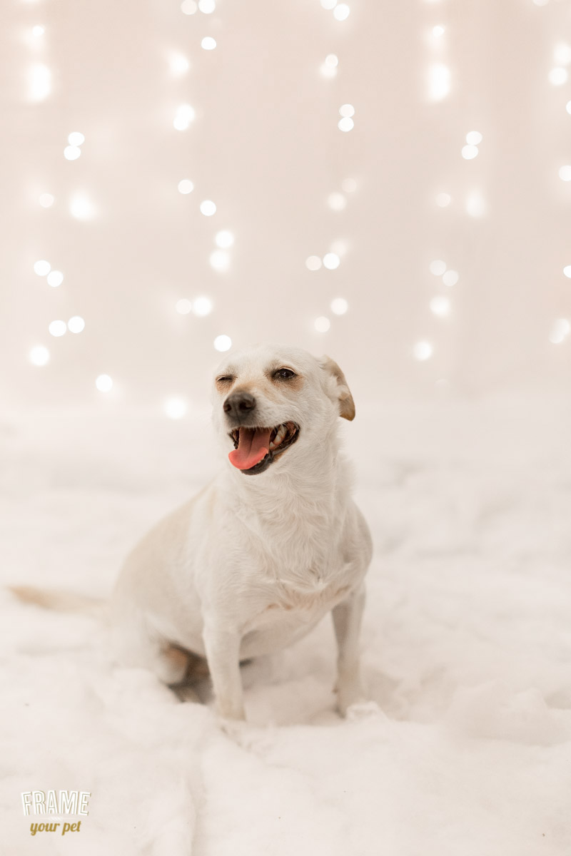 los-angeles-modern-dog-photography-33.jpg