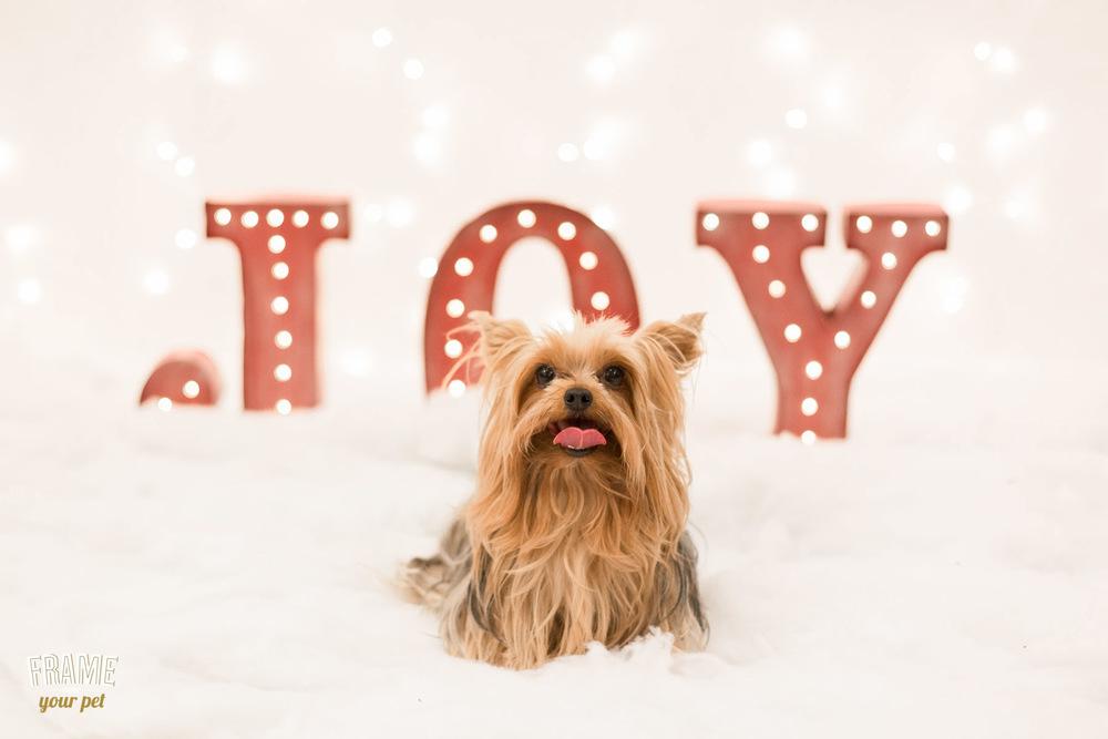 los-angeles-modern-dog-photography-32.jpg