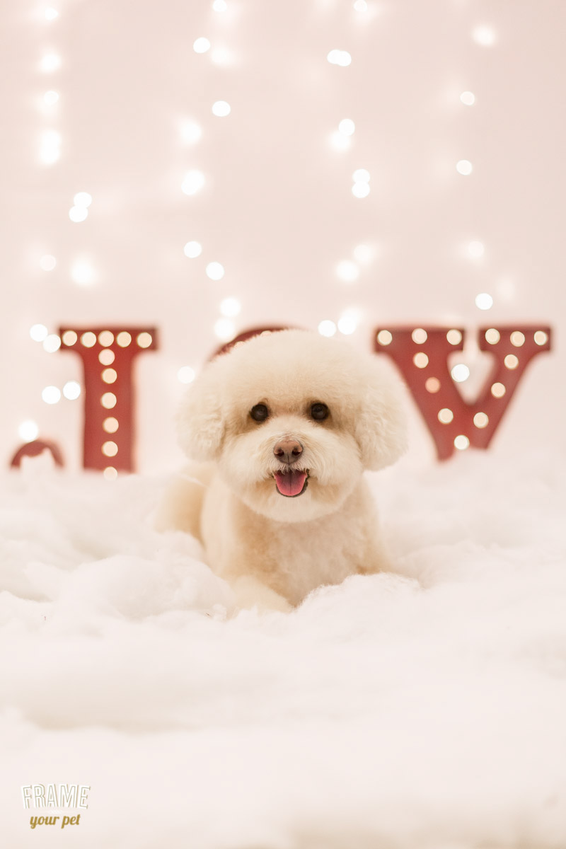 los-angeles-modern-dog-photography-35.jpg