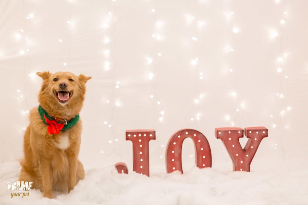 los-angeles-modern-dog-photography-36.jpg