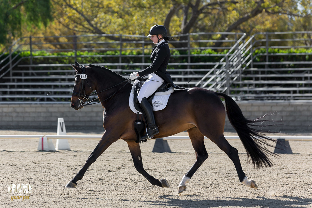 dressage-extended-trot-figure