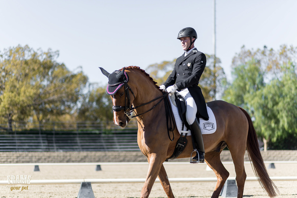 dressage-test-hansen-dam-2015