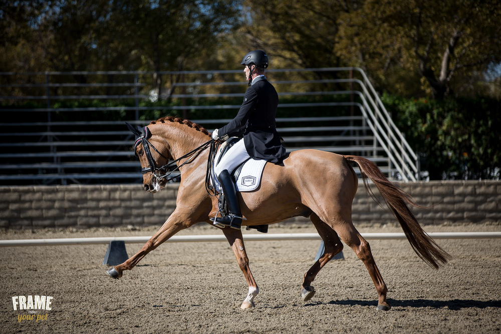 extended-trot-correct-horse-figure