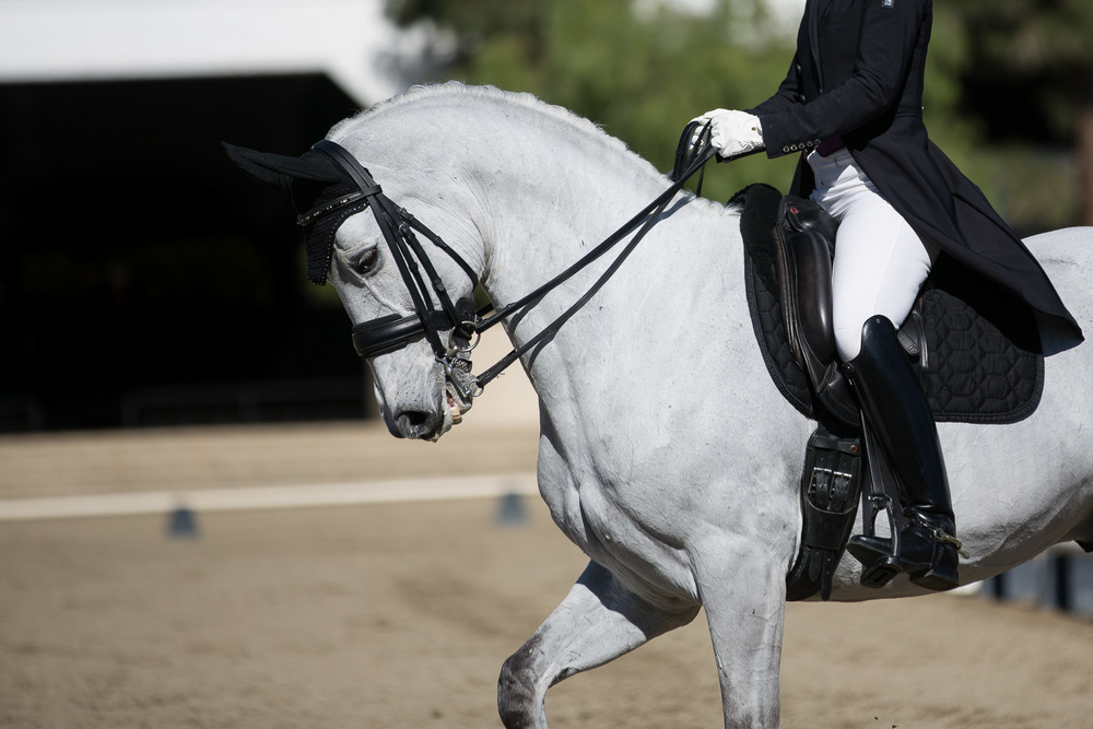dressage-competition-los-angeles.jpg