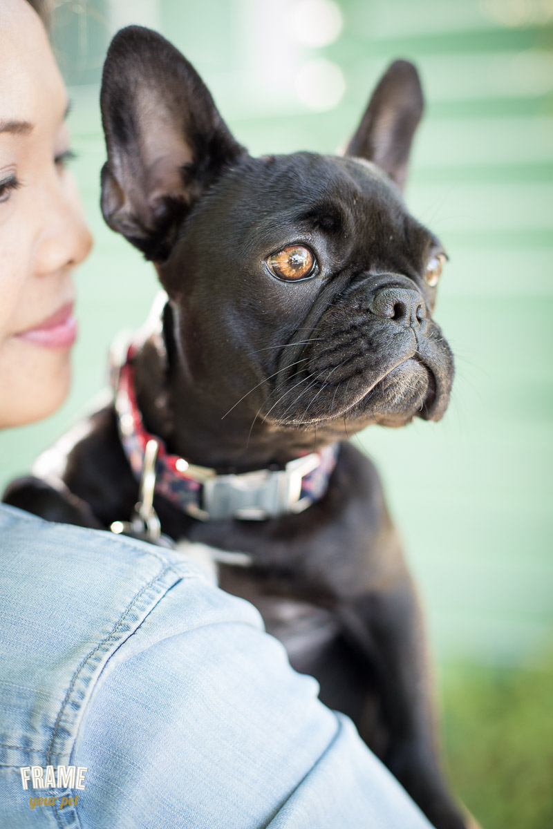 pet-photography-session-santa-monica