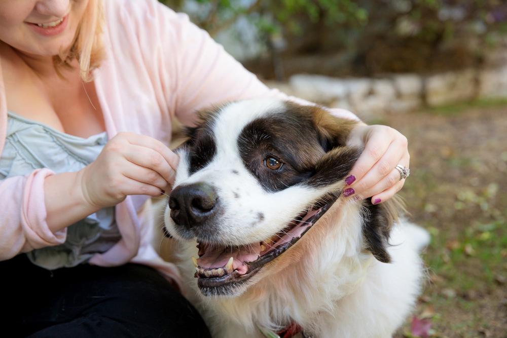 dog-smiling.jpg