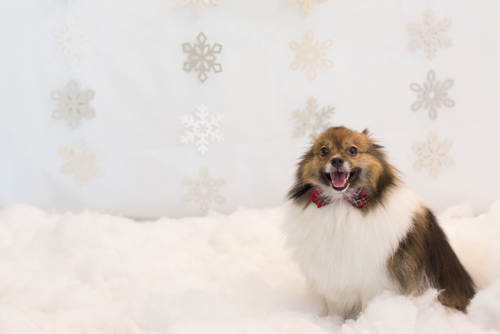 holidays-gift-certificates-for-dog-lovers