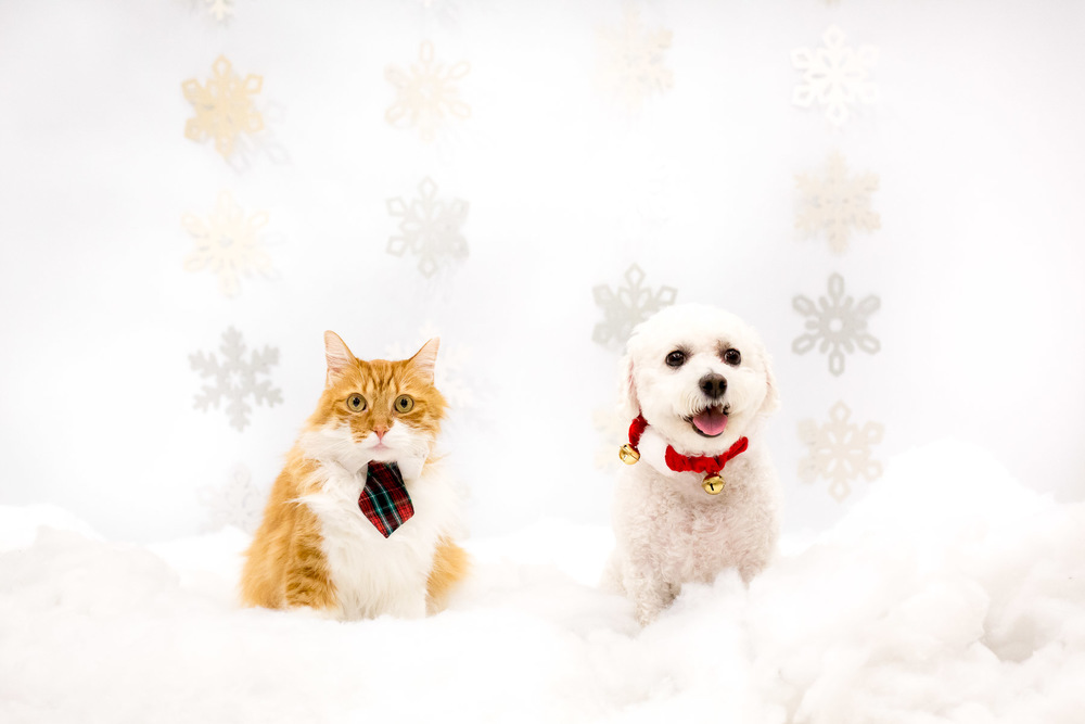 cat-and-dog-holidays-postcard-photos