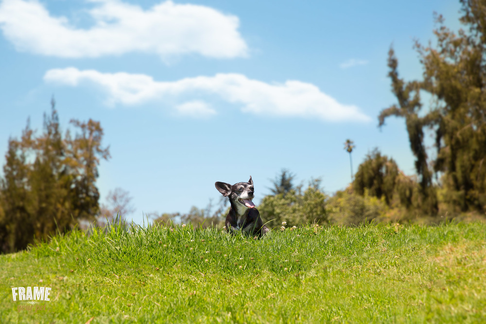 Los-Angeles-modern-pet-photography.jpg