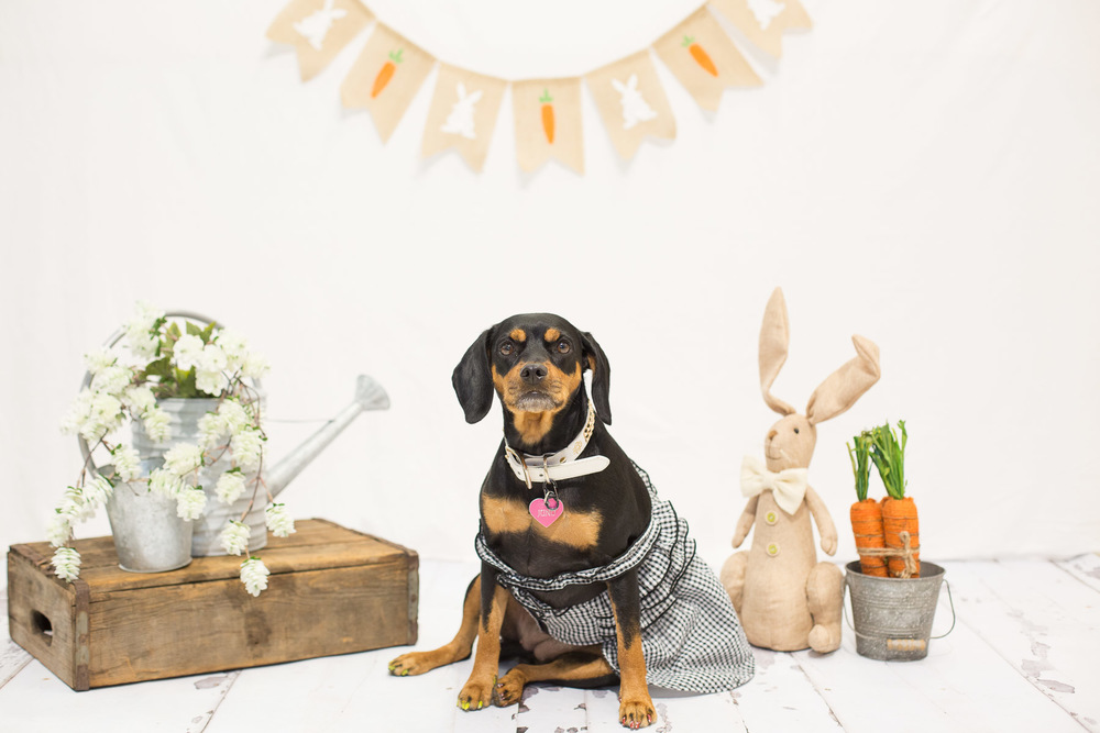 easter-photo-booth-ideas.jpg