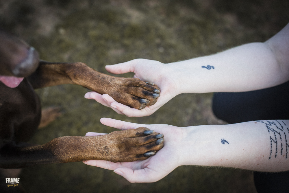 dog-holding-hands-with-woman-paws.jpg