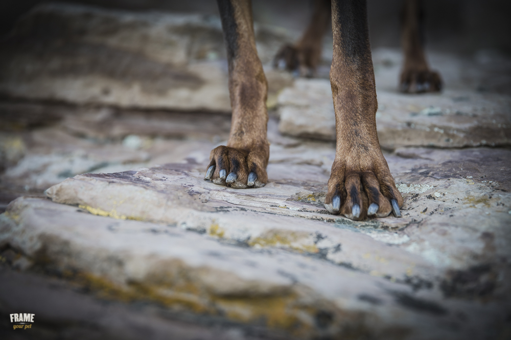 dog-paws-on-rock.jpg