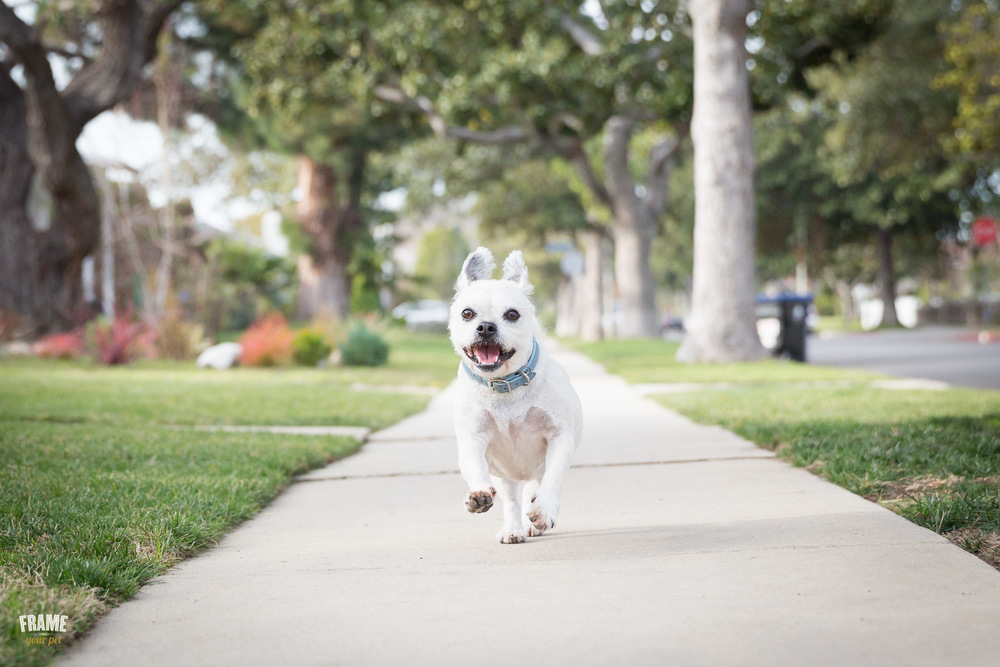 dog-running-happy-towards-camera-photography.jpg