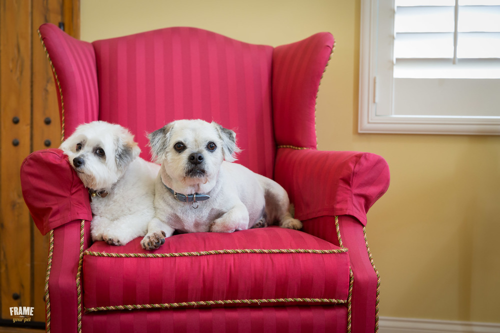 dogs-on-couch-dog-photographer-los-angeles.jpg