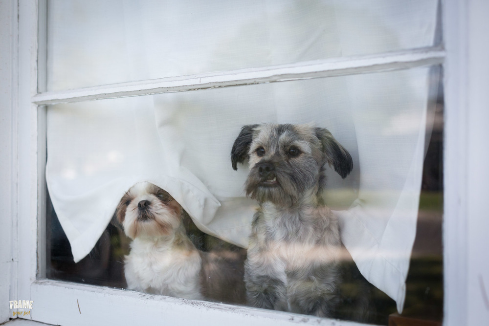dogs-on-window-photo.jpg
