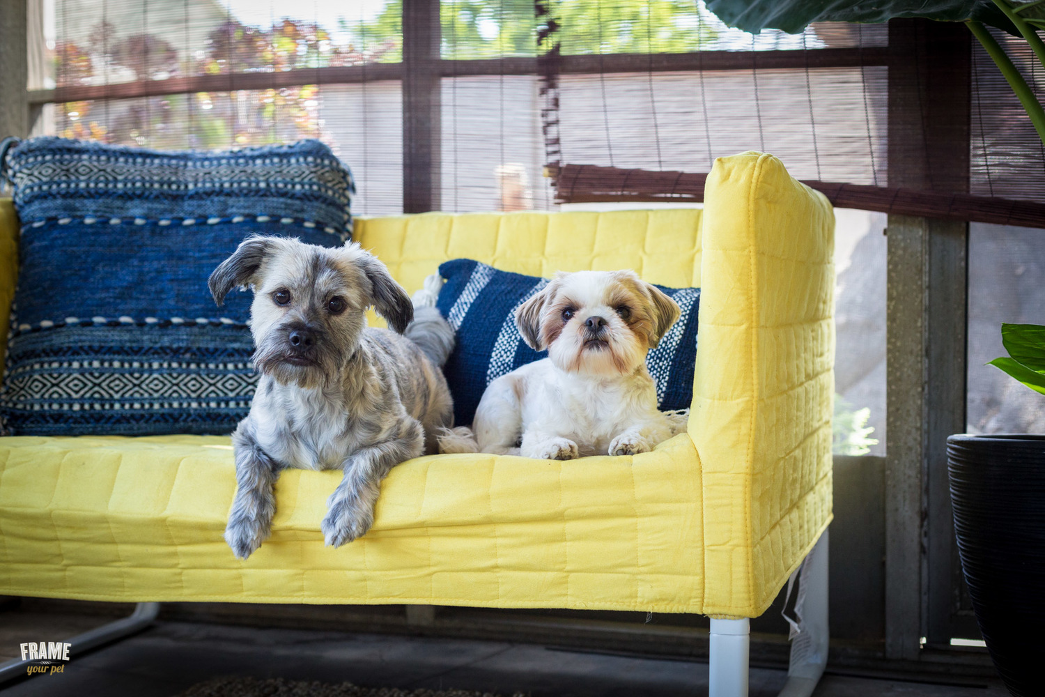 Fun outdoor dog photography session — Frame Your Pet - Los Angeles ...