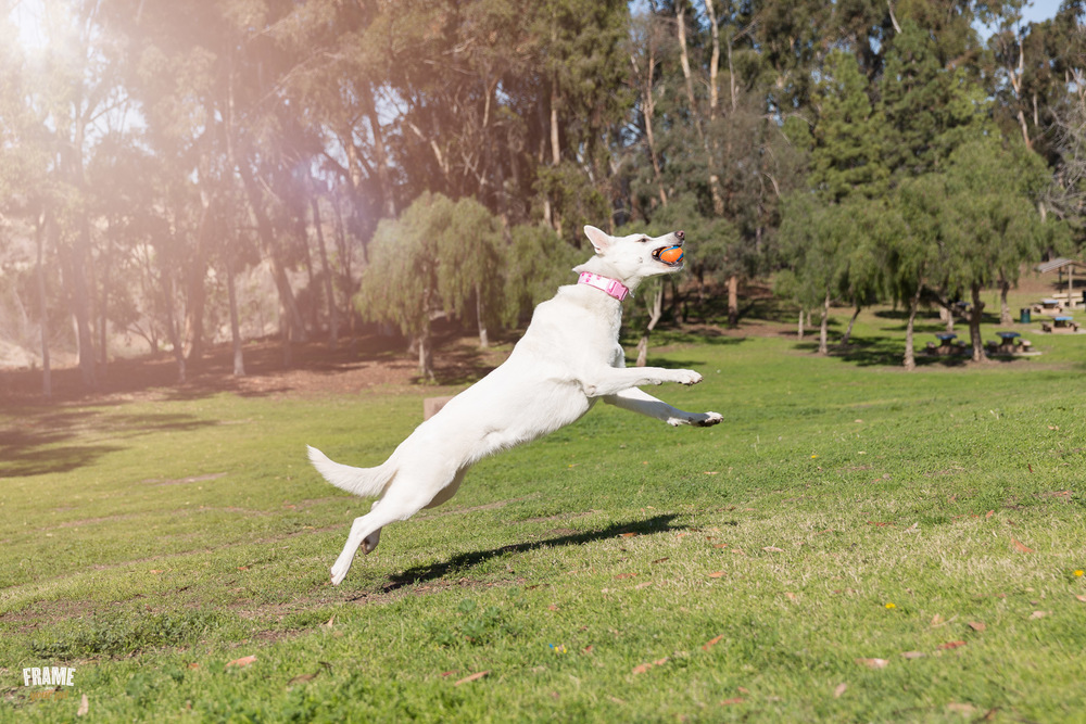 dog-catching-ball-on-air.jpg