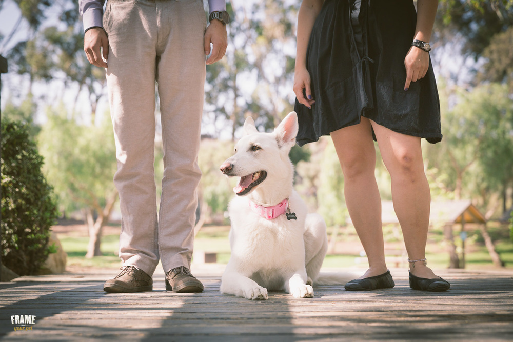 lifestyle-family-dog-photography-session-santa-monica.jpg