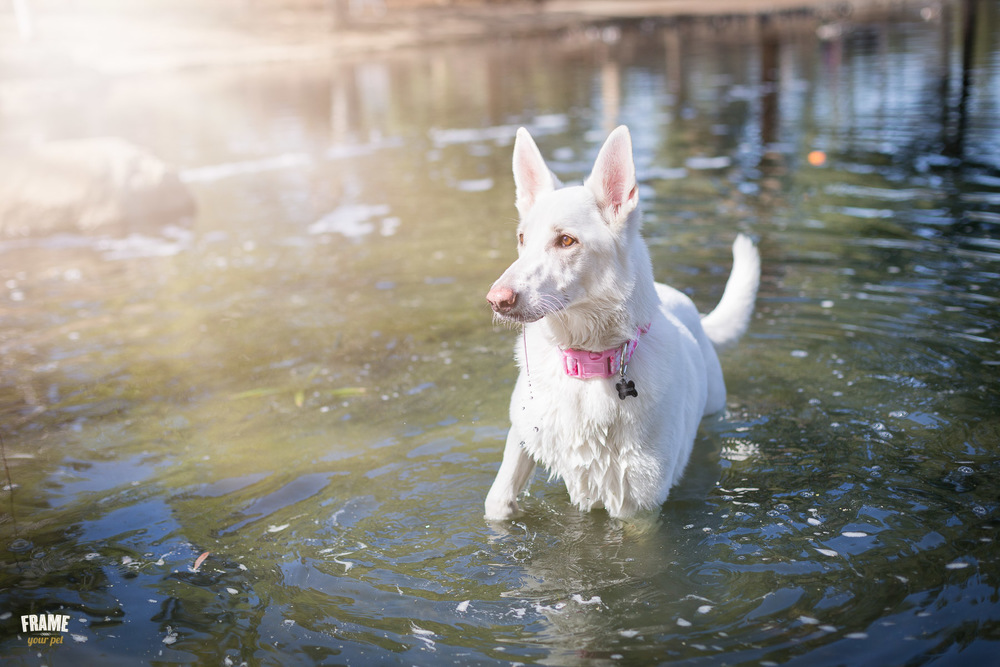 wet-dog-in-water-portrait.jpg