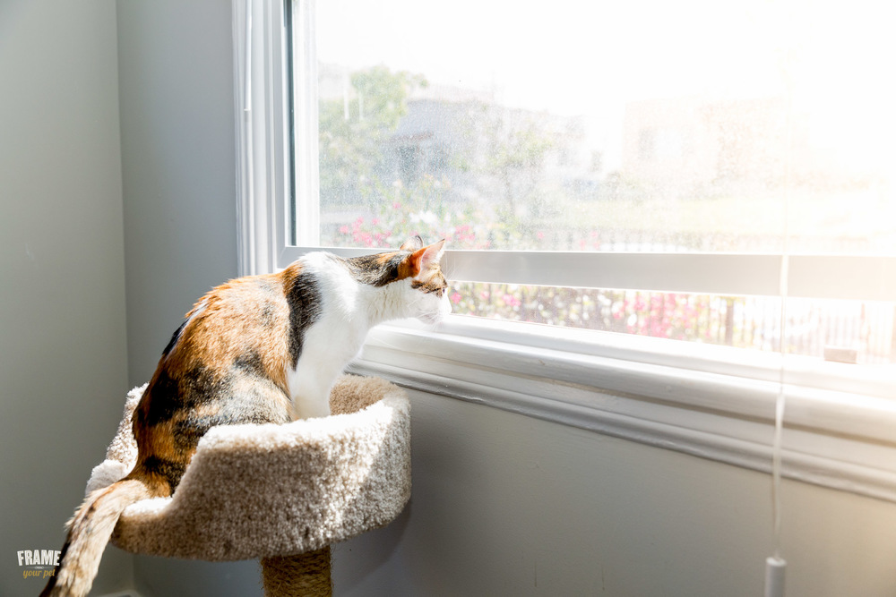 Commercial-cat-photography.jpg