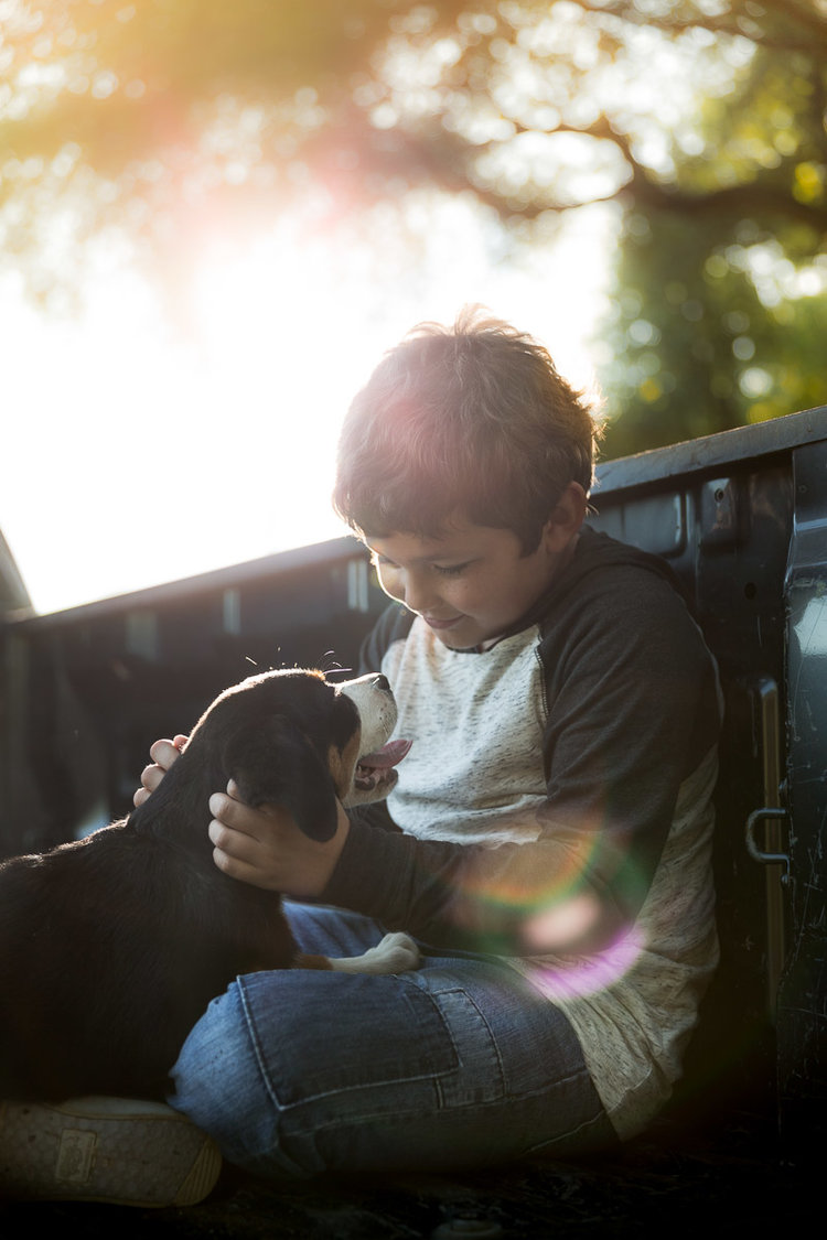 boy-petting-puppy-sunset-dog-photographer.jpg