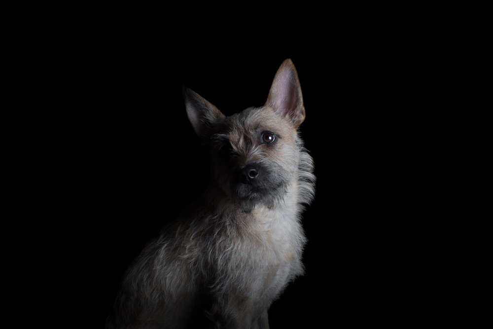 5ARP_0675dog-portraits-in-studio.jpg