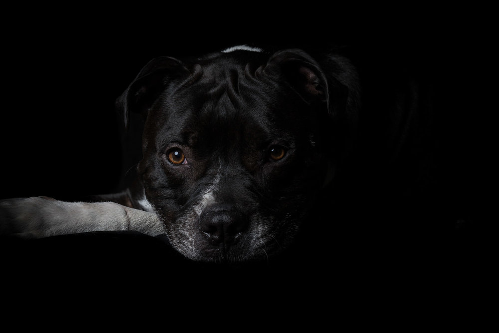 14ARP_0598-2dog-portraits-in-studio.jpg
