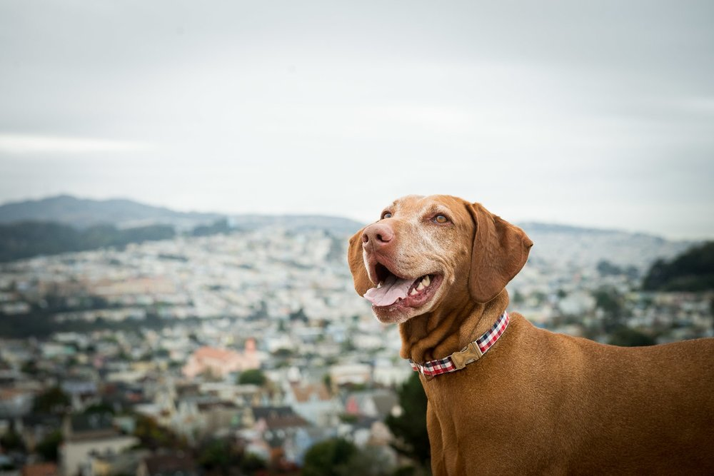 on location dog photographer. bernal heights