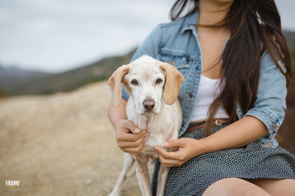 ARP_0618-dog-photographer-los-angeles-pet-photography-santa-monica-animal-photos.jpg