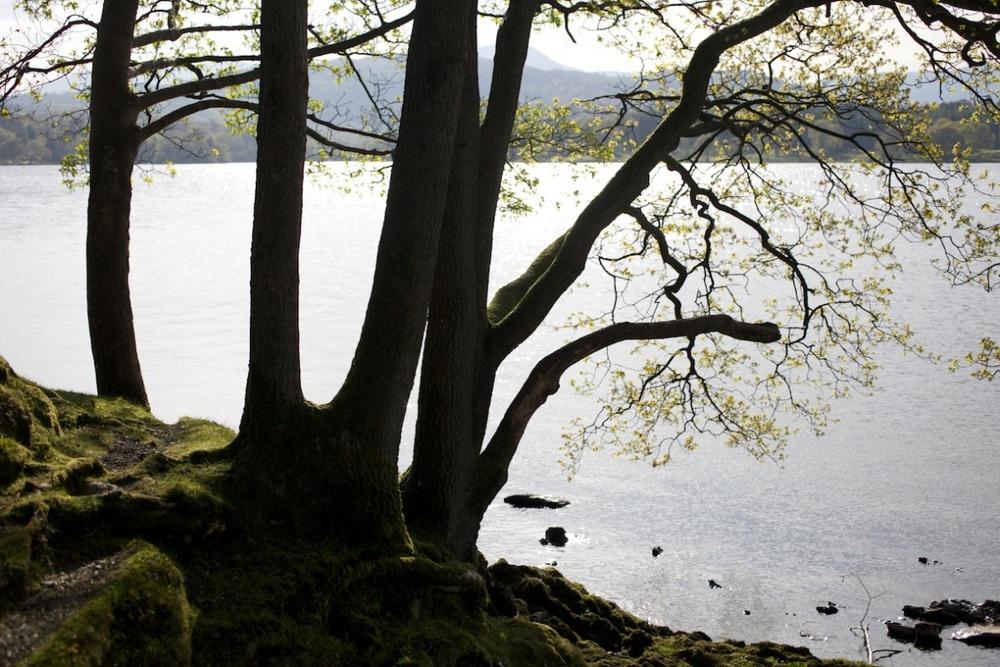 lake trees.jpg