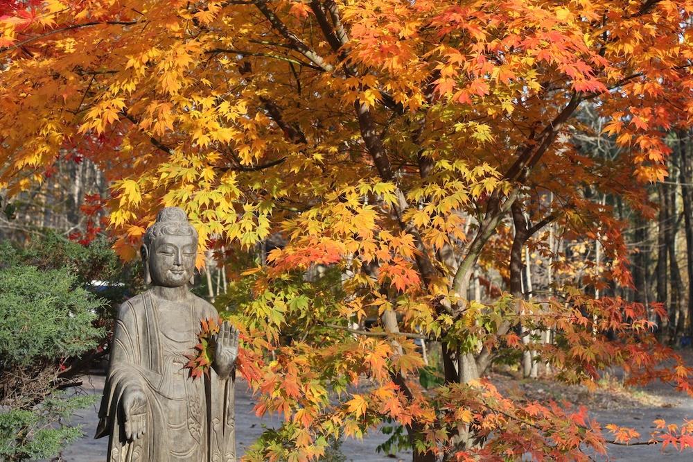 buddha (1).jpg