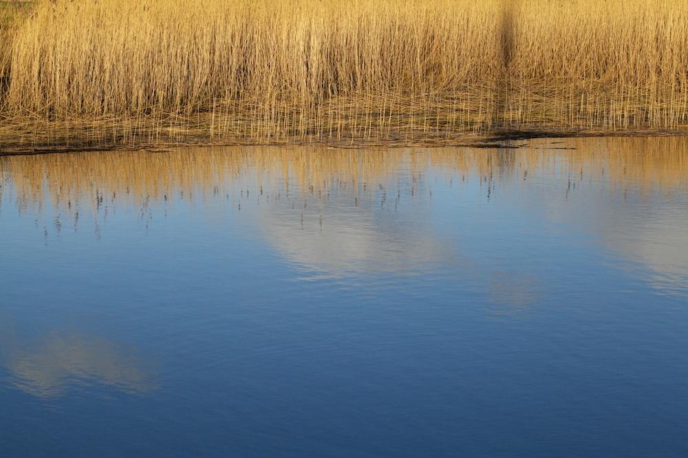 Alde Reeds