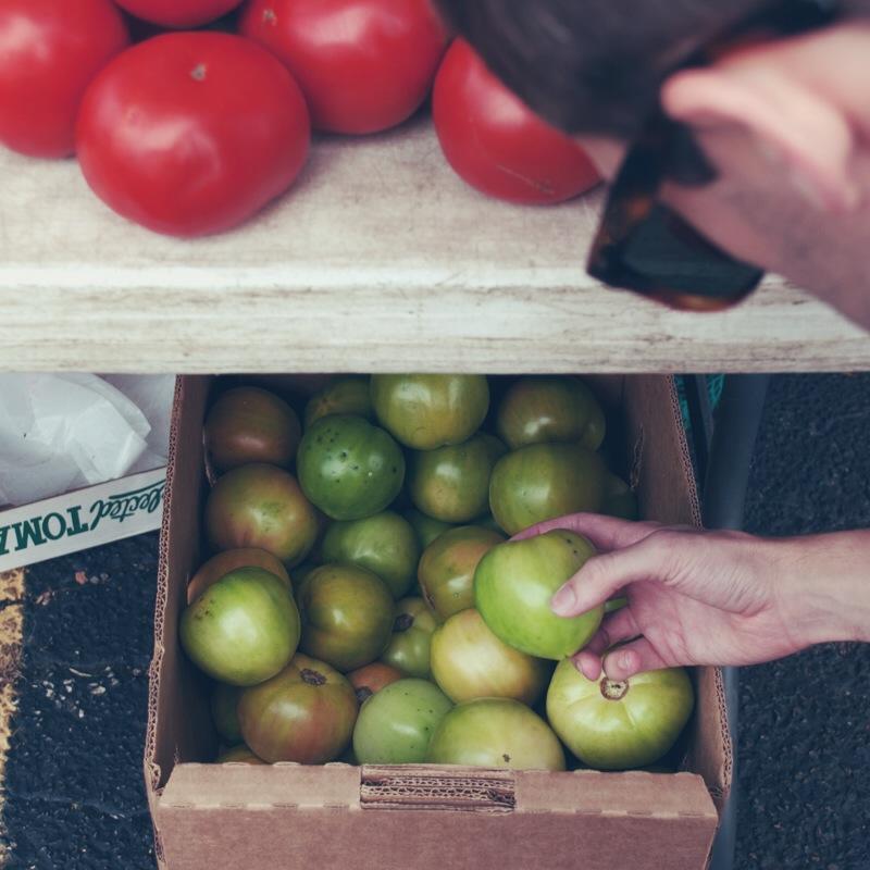 green-tomatoes.JPG