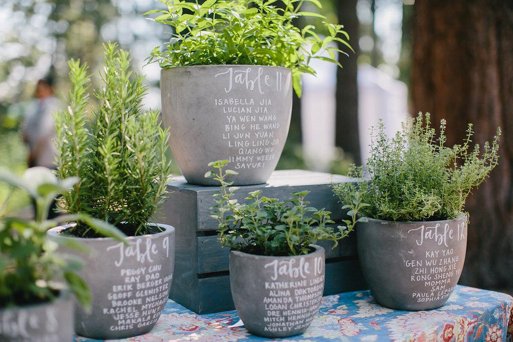 ev and che herbs.jpg