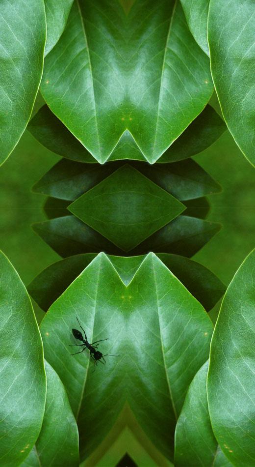 D01_fantastic leaf_01.jpg