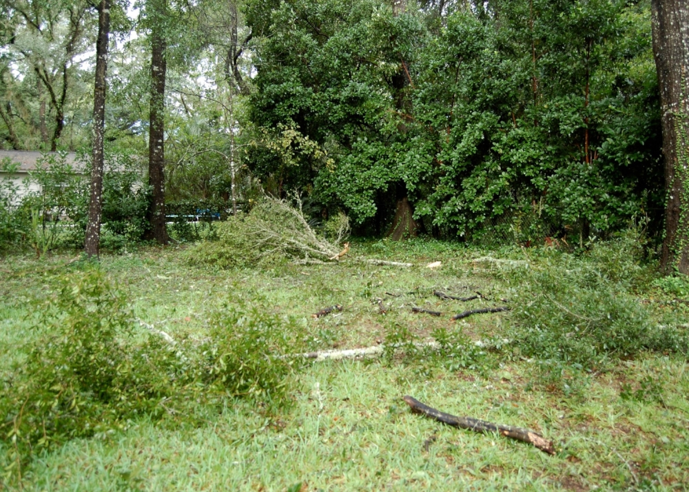 Limbs down in the backyard after Hermine