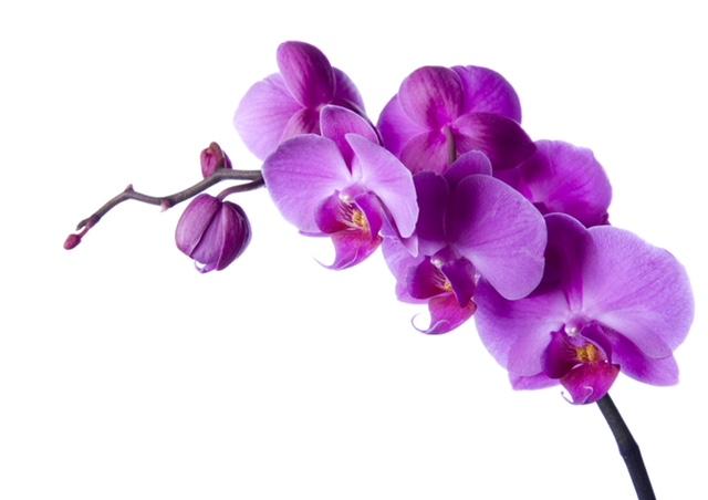 Ultra Violet Florals