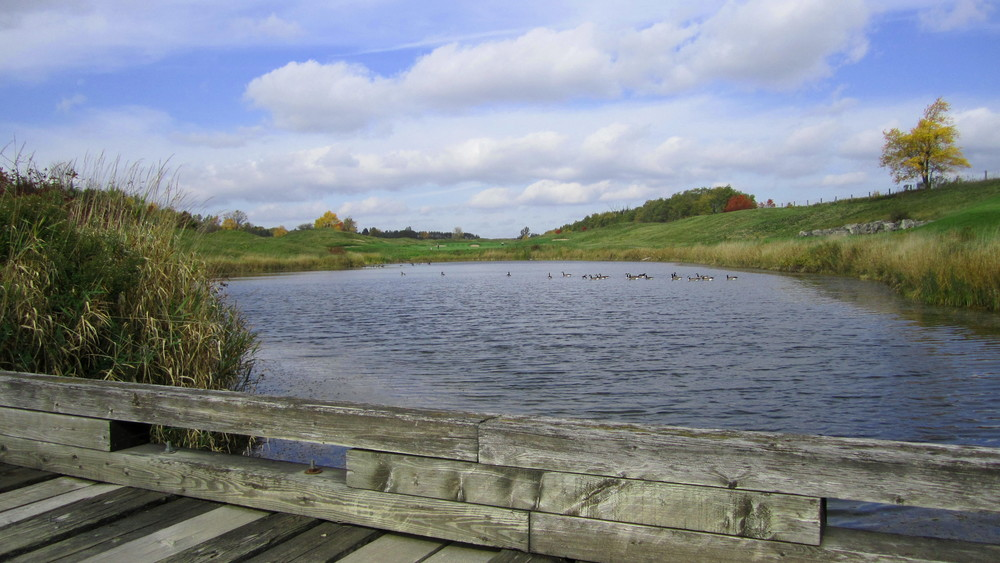 Pond on Heathlands #1 by Scott Littleton