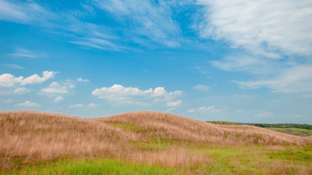 heathlands-fescue.jpg