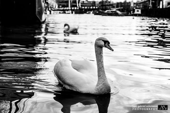 JGS PHOTOGRAPHY-2014JGS_pHOTOGRAPHY-2867.jpg