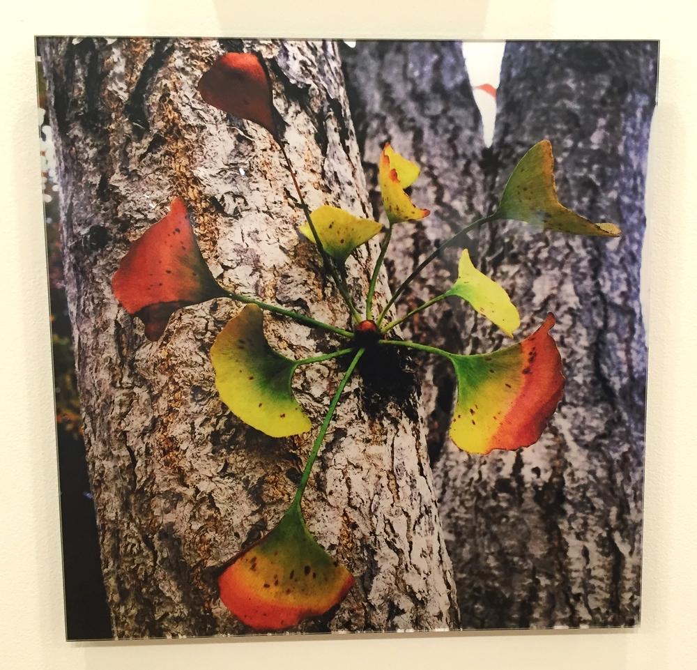 33. Tree Flower, $390