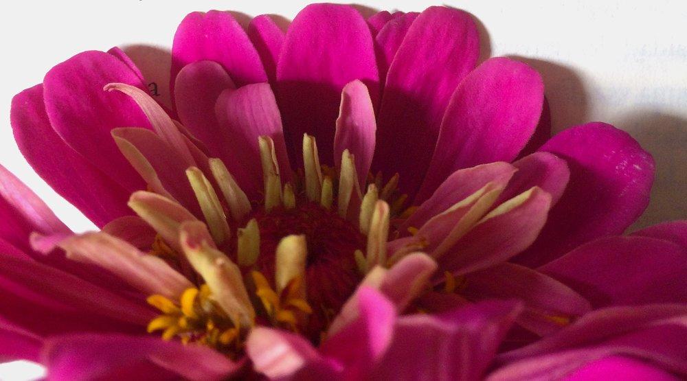 fleur Eliot.jpeg