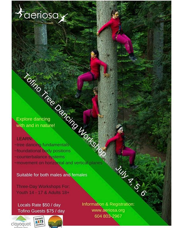 Tofino Tree Dancing Workshop - July 4,5 & 6. Contact www.aeriosa.org for details! . . . @tourismtofino #aeriosa #tofino
